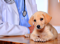 vet and pup
